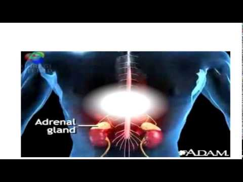 Trabalho Acadêmico de Patologia: Sistema Renina  Angiotensina  Aldosterona