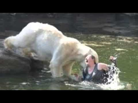 Polar Bear Attacking A Women In A Zoo