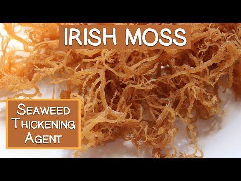 Irish Moss Seaweed, A Nutritious Thickening Agent