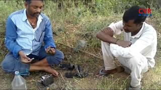 Man Eating Cobra Snake in Peddapalli Mandal | Karimnagar | CVR NEWS - CVRNEWSOFFICIAL