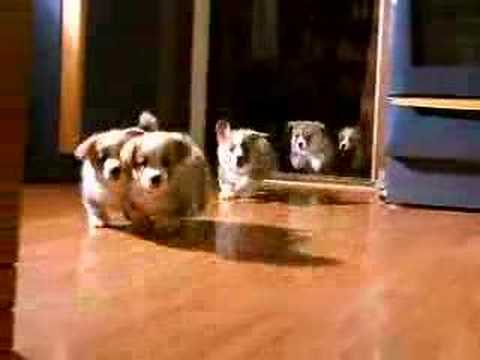 Video: RELEASE! - the puppies...