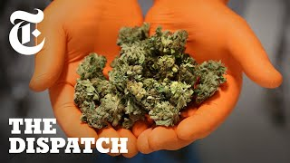 Inside Canada's New Weed Economy: Meet the Winners and Losers | Dispatches - THENEWYORKTIMES