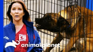 Mission K9 Rescue Helps Tia With A Difficult Breed Of Dog | Pit Bulls & Parolees - ANIMALPLANETTV