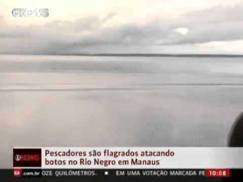 Pescadores são flagrados atacando botos em Manaus