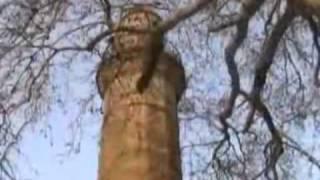 kahramanmaraş türküsü