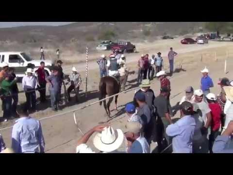 Carreras de Caballos Apozol, Zacatecas