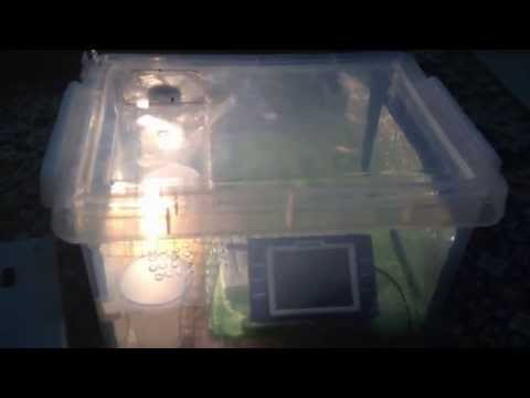 An update on my homemade DIY incubator