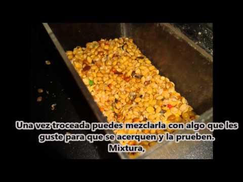 Pasta de cría para agapornis / Cría de agapornis / Alimentación agapornis