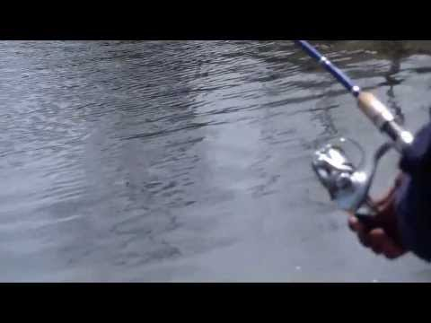 Fishing report - Team New St-1/1 Video