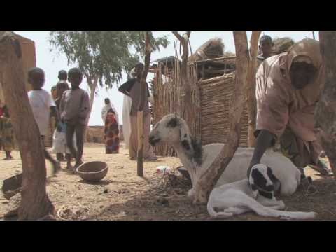 Hedging Against Hunger - World Food Programme