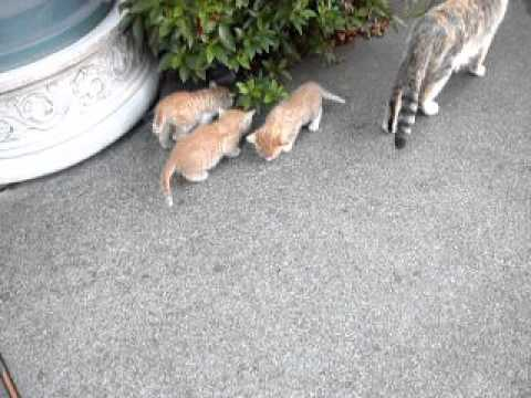 five kittens for youtube 053113 004