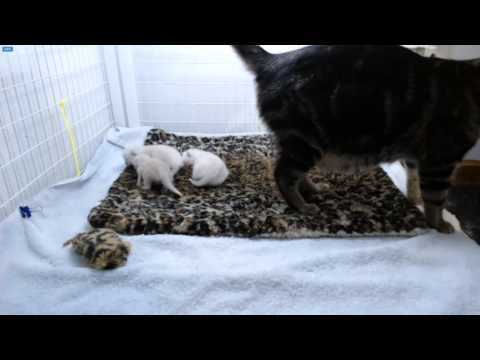 Ghostbusters Kittens – Evening Feeding ...