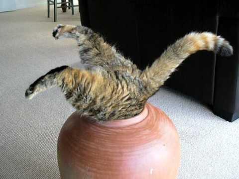 Mačka ušla u ćup
