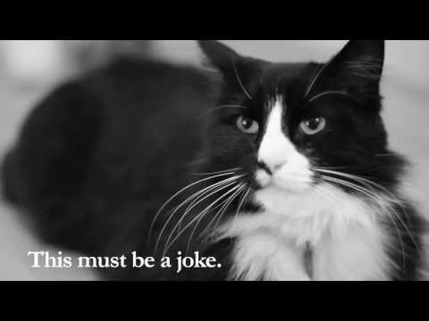Henri The Existential Cat Youtube