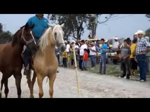 Santa Rita, Carreras de Caballos 2014