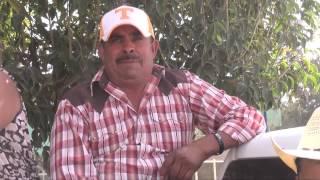 Saludos en Miguel Hidalgo (Hidalgo) (Fresnillo, Zacatecas)