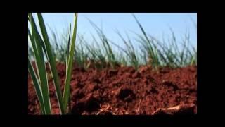Produção agrícola na Matala - Angola