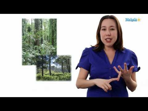 Learn Biology: Biodiversity Definition
