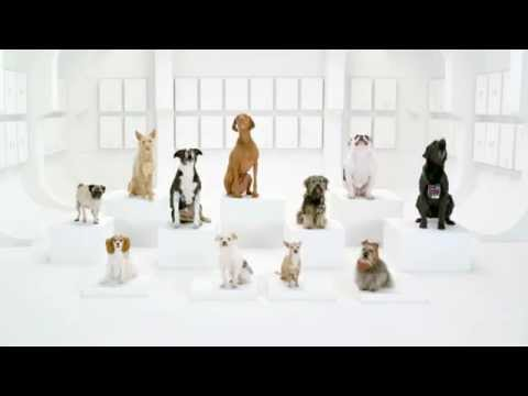Comercial de carros com 12 cães interpretam Star Wars