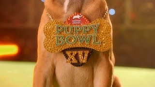 Puppy Bowl XV Turnover Chain: It's All About the Pups - ANIMALPLANETTV