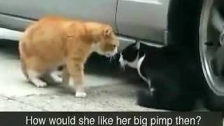 funny cat pissed off at her boyfriend!!! MUST WATCH
