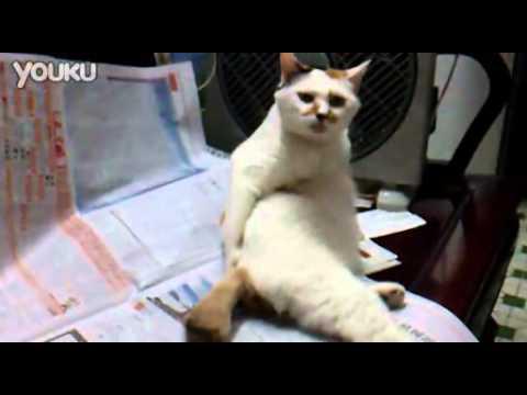 大叔貓抓癢超爆笑~這貓太給力了