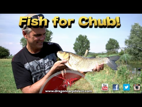 Go chub fishing with Dragon Carp Direct