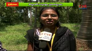 How to solve coconut pest and diseases | Srikakulam Dist | CVR News - CVRNEWSOFFICIAL