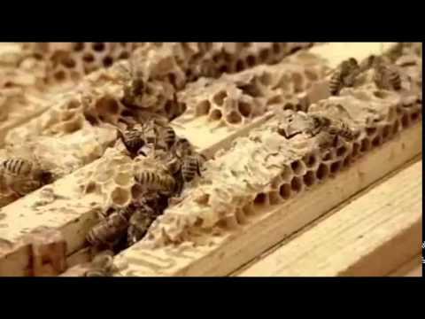 Victorian Beekeeper
