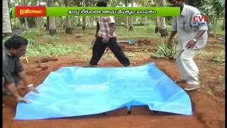 అజోలా తయారీ చేయువిధానం | Azolla Cultivation for Organic Agriculture | Raithe Raju - CVRNEWSOFFICIAL