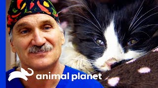 """They Say Cats Have 9 Lives... He's Used 7 Of Them!"" 