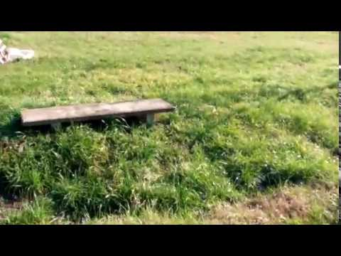 Doogee DG280 Leo test video 1080p by GizChina.it