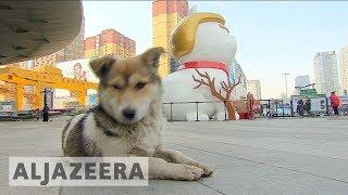 Will Trump be unlucky in the Chinese Year of the Dog? - ALJAZEERAENGLISH