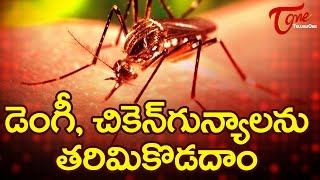 How To Prevent Dengue and Chikungunya - TELUGUONE