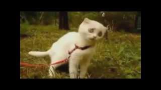 すんげぇイカつい猫。メンチきり半端ない