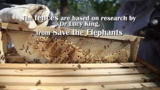 Africa's eco-warriors' honey trap for a mammoth problem - ABNDIGITAL