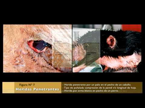 patología forense veterinaria