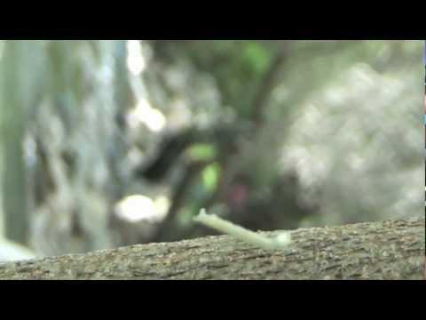 El gusano feliz y volador.m4v