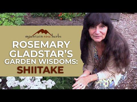 Rosemary Gladstar's Garden Wisdoms: Shiitake Mushrooms