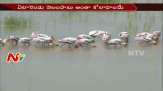 Special Attraction to 3 Villages || Foreign Birds Tour || NTV