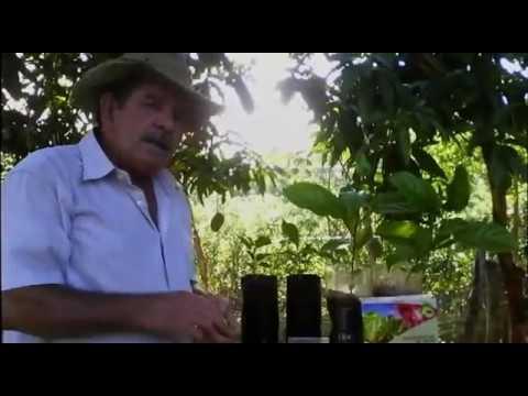 Colecionador de frutas apresenta o Fertilizante Inseticida Nematicida Orgânico Neem