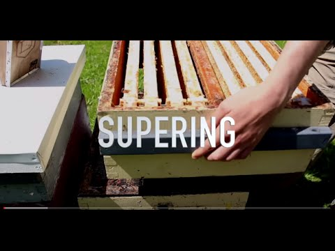 Supering Hives