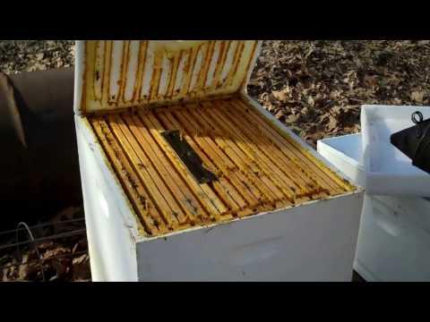 Beekeepers concern about Hive Beetles. Honey Bees Health