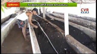 సేంద్రియ ఎరువులతో అధిక లాభాలు ఆర్జిస్తున్న రైతులు : Raithe Raju | CVR News - CVRNEWSOFFICIAL