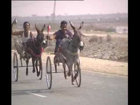 Shahdadkot Race of Donkeys uploaded by Abdullah Solangi