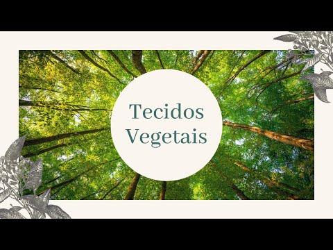BioInfo - Histologia Vegetal - Tecidos Vegetais