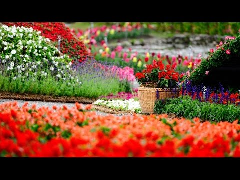 Master Sustainable Gardening: Tips For Sustainable Landscaping With Owen Dell | Amazing Earth