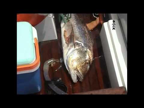 tecnica di pesca sub (primavera).hd720 le stagioni della pesca