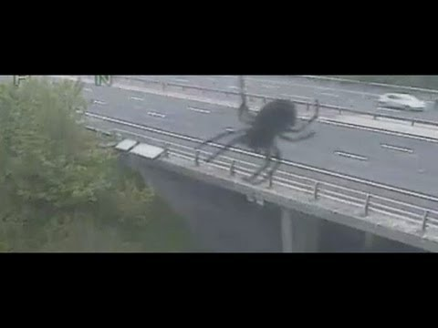 Giant spider terrorises M3 in Hampshire: CCTV of 40 foot spider?