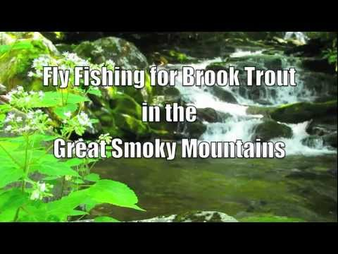 Fly Fishing for Brook Trout in the Smoky Mountains - Advice From the Guides